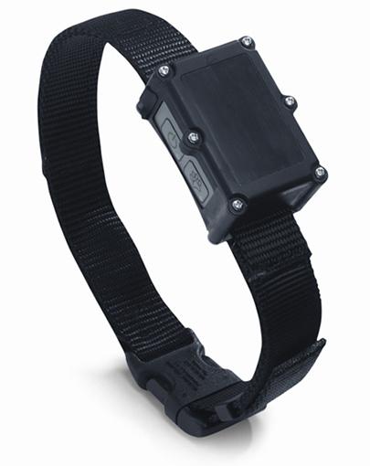 collar_lrg1.jpg